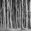 Ежесекундно на планете уничтожается участок леса размером с футбольное поле