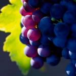 Виноград способен уменьшать кровяное давление